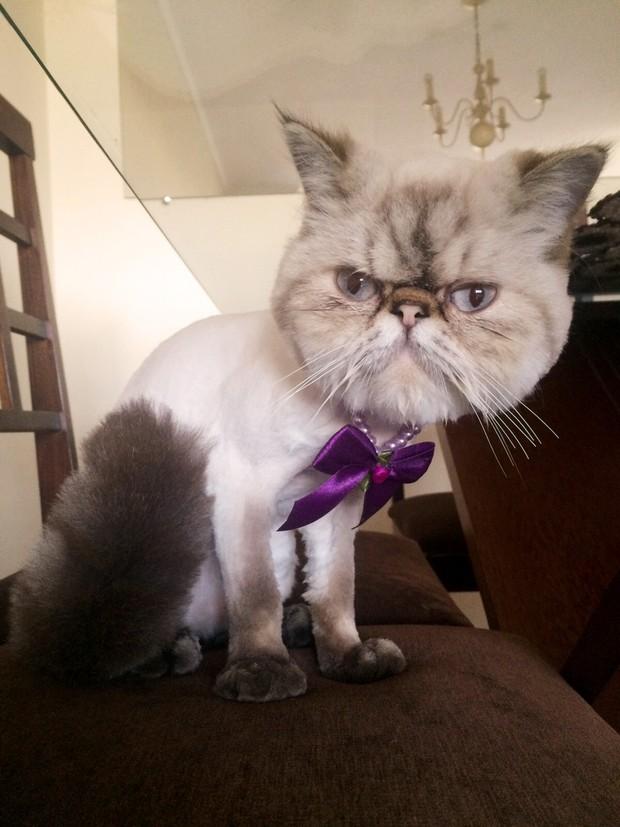 Gato da Andressa Urach (Foto: Reprodução / Instagram)