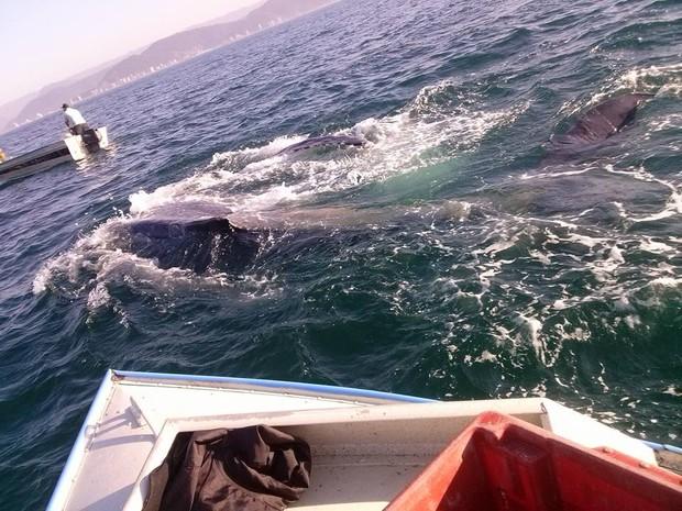 Animal foi visto de perto por grupo de pescadores no litoral de SP (Foto: Cícero Barbosa / Arquivo Pessoal)