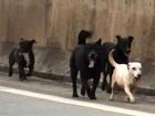 Motociclista para trânsito em rodovia e salva cães na Grande SP