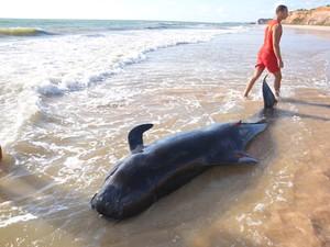 Pessoas tentam salvar baleia encalhada na Praia do Sol em João Pessoa (Foto: Walter Paparazzo/G1)
