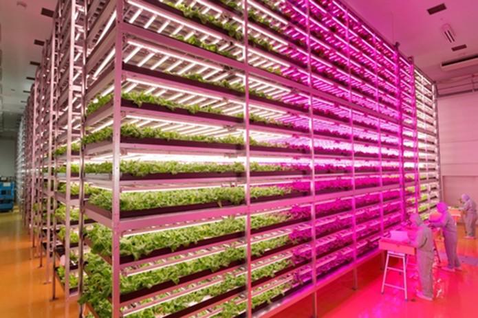 Fazenda interna da GE utiliza lâmpadas LED para simular a luz do dia e da noite para aumentar a produção (Foto: Divulgação/General Eletric)