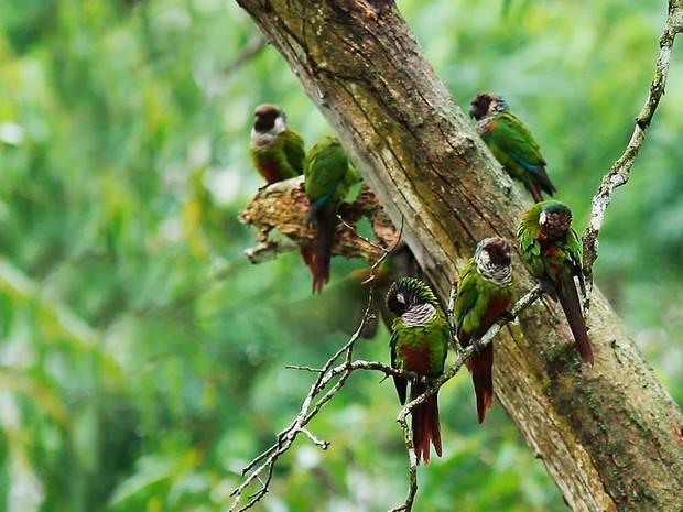 Equipe do Terra da Gente sai em busca de pássaro ameaçado de extinção (Foto: Reprodução / EPTV)