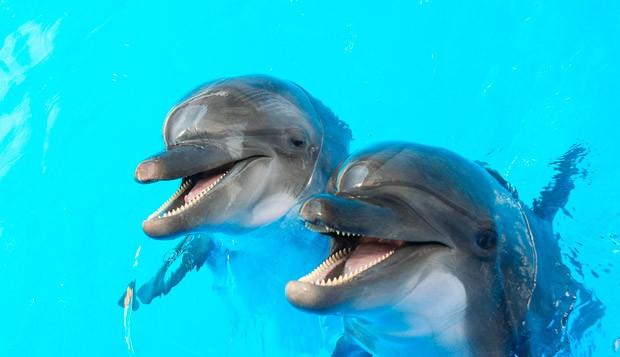 Dolphin Island (Foto: Divulgao)