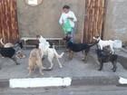 10 cachorros são envenenados com chumbinho e 4 morrem em Tambaú
