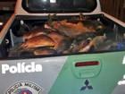 Casal é multado em R$ 19.440 por armazenar irregularmente peixe