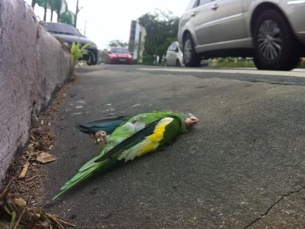 Caso ocorreu na manhã desta quinta-feira (27) (Foto: Patrick Mota/Amazonas FM)