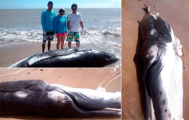 Filhote morreu ao encalhar na praia de Carnaubinha, no litoral do município de Touros, no Rio Grande do Norte (Foto: Daniela Pereira/G1)