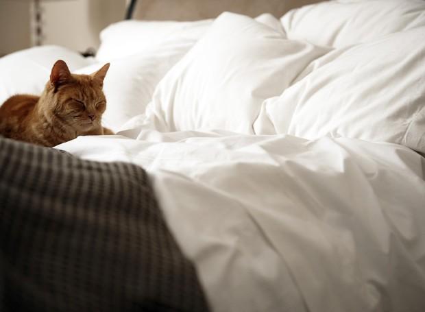 cama-gatos-pelos (Foto: Thinkstock)