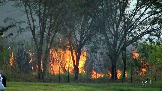 Polícia Ambiental aplica R$ 3,5 milhões em multas por queimadas neste ano na região de Rio Preto