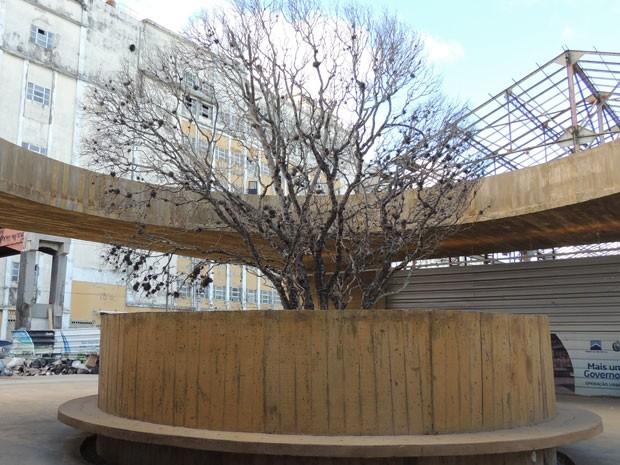 Juazeiro com mais de 50 anos, pesando 10 toneladas, foi trazido de Gravatá, no Agreste, em dezembro de 2012. Há risco da planta não sobreviver. (Foto: Luna Markman/ G1)