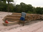 Ribeirinhos exploram floresta de forma sustentável no AM