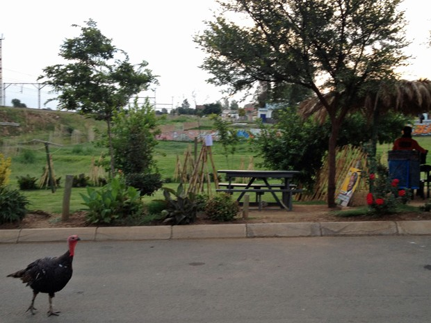 Parque em frente ao hostel, criado por Lebo (Foto: Giovana Sanchez/G1)