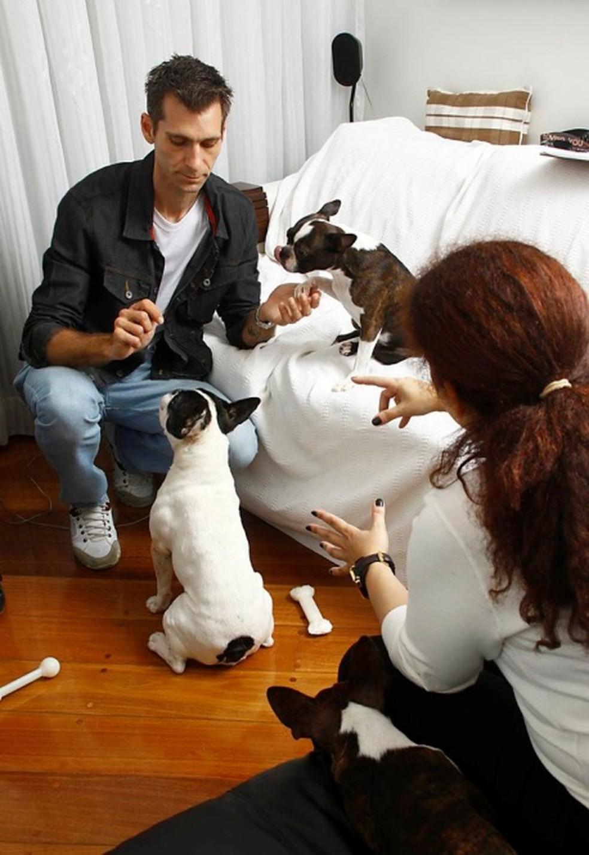 Cães de pequeno ou médio portes são os que mais se adequam ao convívio em apartamentos (Foto: Divulgação)