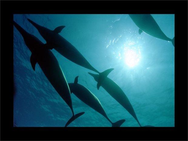 Exposição sobre preservação da biodiversidade marinha é aberta em SE (Foto: Divulgação)