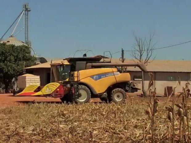 Em Diamantino, produtor parou colheita de milho por falta de espaço em armazéns (Foto: Reprodução/TVCA)