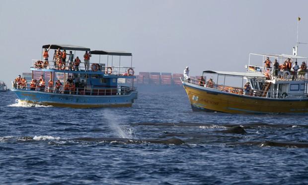 barcos de turistas cercam baleias cachalote no Sri Lanka (Foto: David Loh/Reuters)