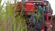 Conab aponta queda na produção de cana no país