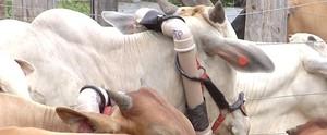 Pesquisador quer desmistificar pecuária como vilã do aquecimento (Reprodução/TV Mirante)