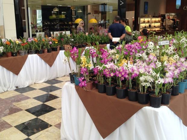 Feira de Orquídeas expõe e comercializa mais de 4 mil vasos de flores (Foto: Mariana Ignácio/Divulgação)