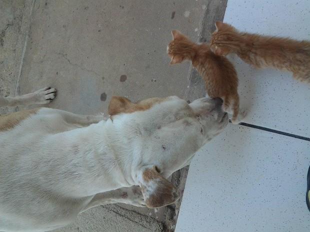 Cadela Mala faz carinhos nos gatinhos (Foto: Andrei Chaves/arquivo pessoal)