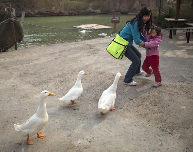 Mãe e filha fogem assustadas de patos que procuram comida em parque de diversões em Pequim, na China (Foto: Alexander F. Yuan/AP)