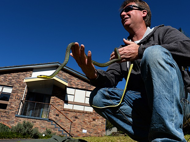 Especialista em serpentes Andrew Melrose segura espécie verde retirada de residência (Foto: Saeed Khan/AFP)