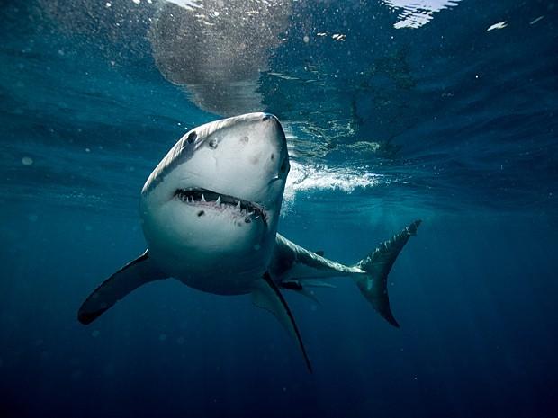 Caçador de tubarão-branco é multado por capturar e matar animal em 2011 (Foto: Image Source/Arquivo AFP)