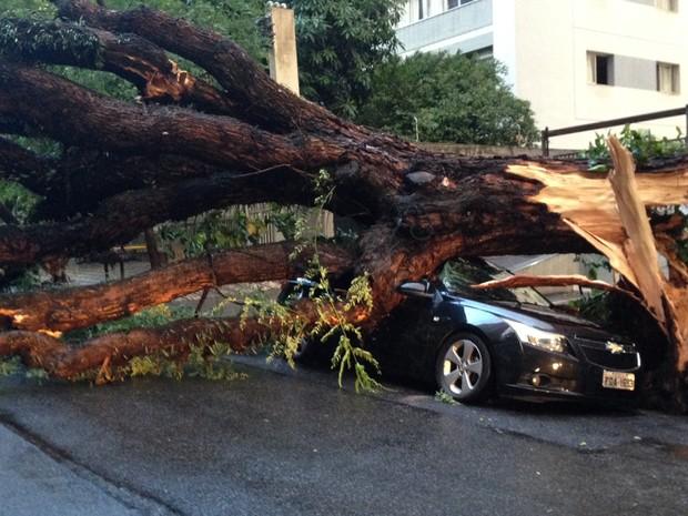 Árvore cai sobre carro na Alameda Casa Branca (Foto: Marcelo Mora/ G1)