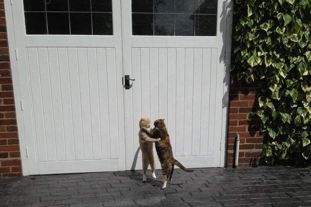 """Gatinhos, irmão e irmã, são flagrados em meio à """"dança"""" (Foto: Reprodução)"""