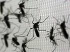 Friburgo tem 252 casos de dengue e 15 suspeitas de zika (Paulo Whitaker/Reuters)