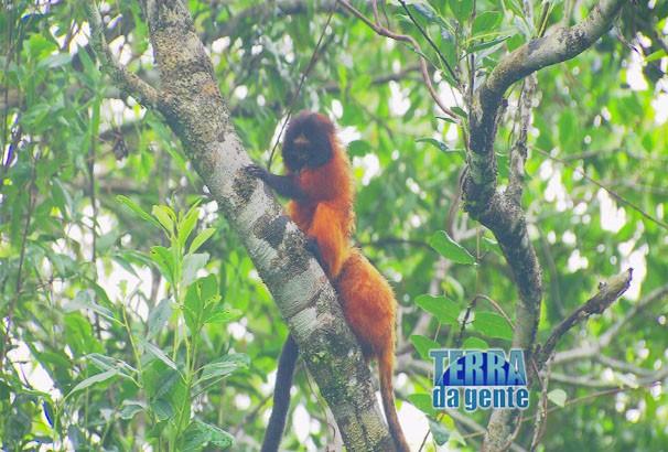 Vamos conhecer por que essas espécies optaram por viver no Pg. Nacional do Superagui. (Foto: Reprodução/TVCA)
