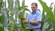 CREA fiscaliza propriedades rurais no sul do Estado