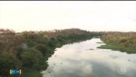 Águapés voltam a aparecer nos rios deTeresina