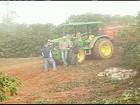 Em SP, fiscalização encontra irregularidades na colheita do café