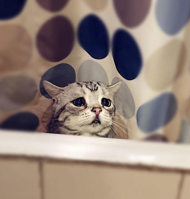 Luhu: o gato mais triste do mundo (Foto: Reprodução)