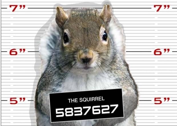 Esquilo virou 'suspeito' após roubo de carga de nozes nos EUA (Foto: Reprodução/Facebook/Shelby Township Police Department)