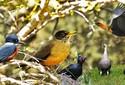 As aves de Ushuaia, uma cidade no fim do mundo