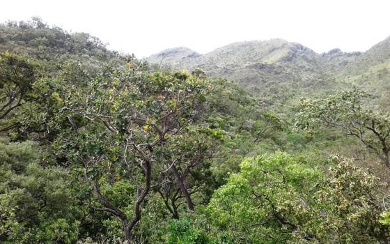 Parque Nacional da Serra da Canastra, em Minas Gerais (Foto: Marc Dourojeanni)