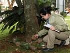 Índice de infestação aponta alto risco de epidemia de dengue em Cascavel