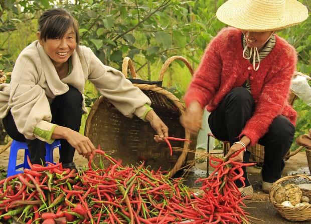 Com tradição rural forte e cultura gastronômica milenar baseada nos produtos do campo, a China é uma viagem de cores e sabores (Foto: Giselle Paulino)