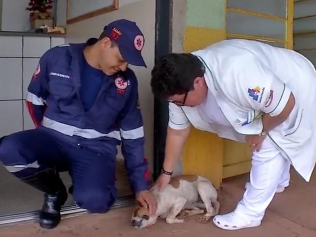 Cadela seguiu a ambulância que levou o dono até o hospital (Foto: Reprodução/TVCA)