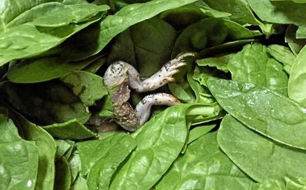 Donna Souza ficou em choque ao encontrar sapo morto em embalagem de salada (Foto: Reprodução/Twitter/Billy Corben)