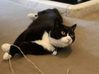 Chancelaria britânica 'contrata' caçador oficial de ratos
