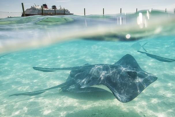 Além do mergulho com as arraias, na Castaway Cay é possível caminhar pelo interior da ilha ou explorá-la de bicicleta (Foto: Divulgação/Disney)