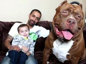 Pitbull tem 18 meses e 79 kg