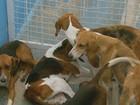 Dois homens são presos e 18 cães apreendidos por caça ilegal em MG