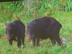 Pesquisadores da Unesp estudam a movimentação de animais selvagens