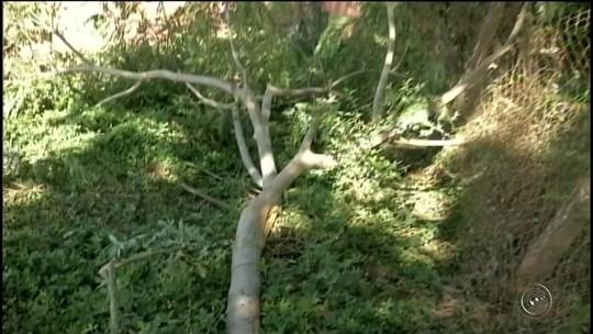 Polícia apura se piloto que bateu em árvore com quadriciclo era habilitado