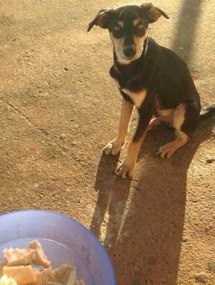 Cão em página que incentiva adoção em Piracicaba (Foto: Natália Benoti/Acervo pessoal)