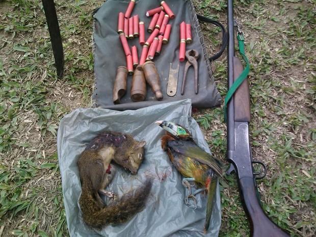 Esquilo e pássaro foram encontrados mortos durante blitz ambiental (Foto: Divulgação/SEA-RJ)
